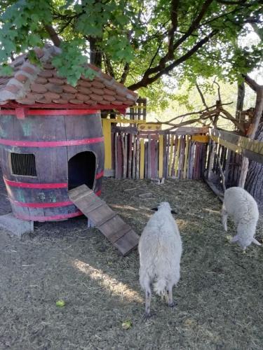 Etno-selo-Luznice-ovce