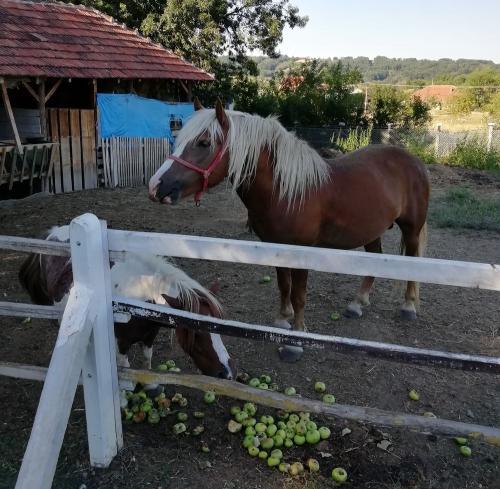 etno-selo-Luznice-poniji